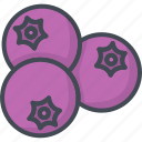 blueberry, food, fruits icon