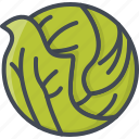 cabbage, food, vegetables icon