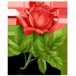 [تصویر: rose.png]