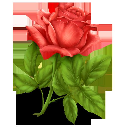كل عضو يزرع وردة في بستان (لاجلك محمـــــــــد) rose.png