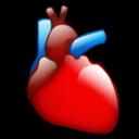 cardiology Srčana arterija