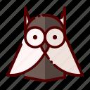 academy, education, owl, study, university
