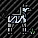 animals, mammal, wildlife, zebra