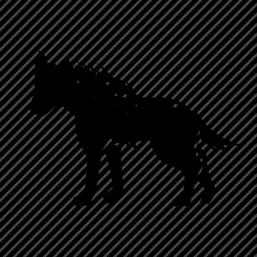 africa, hyena, predator icon