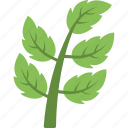 agriculture, branch with leaves, leaf branch, plant, tree branch icon