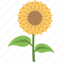 agriculture, botany, gardening, planting, sunflower icon