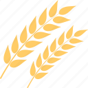 agriculture, food, oats, wheat spikelets, whole grain icon