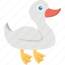 animal, goose, mallard duck, poultry, wildlife icon