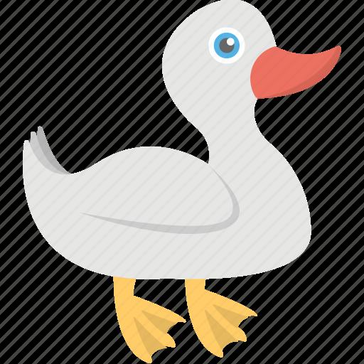 animal, goose, mallard duck, poultry, wildlife icon