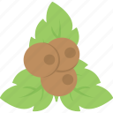 agriculture, coconut, fruit planting, organic food, tropical fruit icon