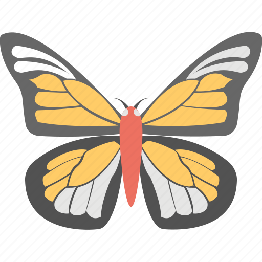 butterfly, insect, monarch butterfly, spring sign, summer icon