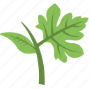 agriculture, greenery, growing plant, leaf branch, leaves icon