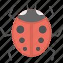beetle, insect, ladybird, ladybug, wildlife icon
