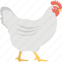 animal, chicken, farming, hen, poultry icon