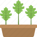 agriculture, growing plants, plant container, plantation, small plants icon