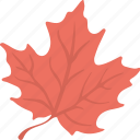 autumn symbol, emblem, leaf, maple leaf, silver maple icon