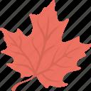 emblem, autumn symbol, leaf, silver maple, maple leaf