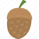 acorn, autumn fruit, dry fruit, food, fruit icon