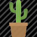 cactus, desert plant, plantation, potted cactus, small cactus icon