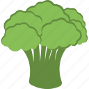 broccoli, cauliflower, green vegetable, organic food, vegetable icon