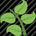 foliage, greenery, leafy branch, tree branch, twig