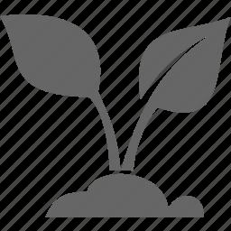 flora, leaf, nature, plant icon