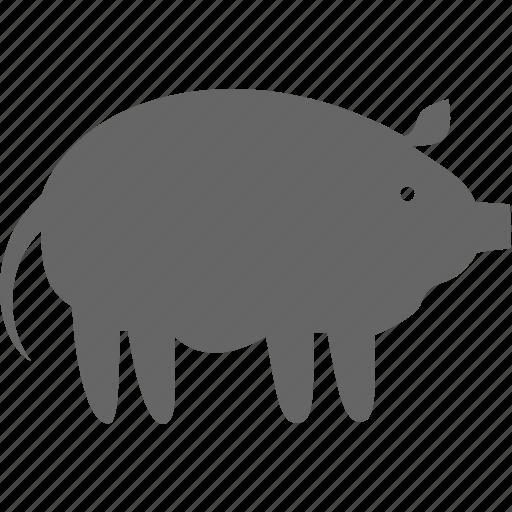 animal, farm, pet, pig icon