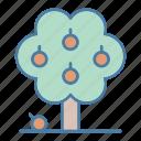 botanical, ecology, nature, orange tree, tree