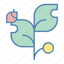 bug, garden, insect, ladybug, leaf, plant, plants