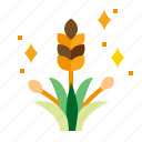 agriculture, plant, rice, field