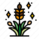 plant, rice, agriculture, field