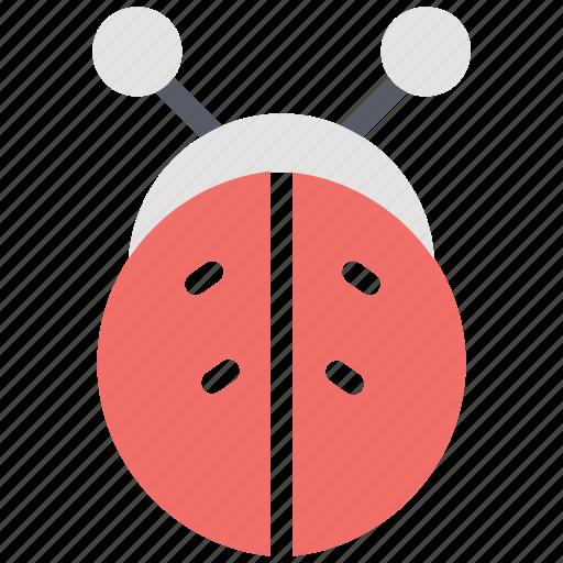 beetle, insect, lady beetle, lady cow, ladybird, ladybug icon