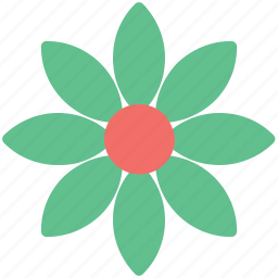 beauty, bloodroot, flower, nature, sanguinaria, spring flower, wildflower icon
