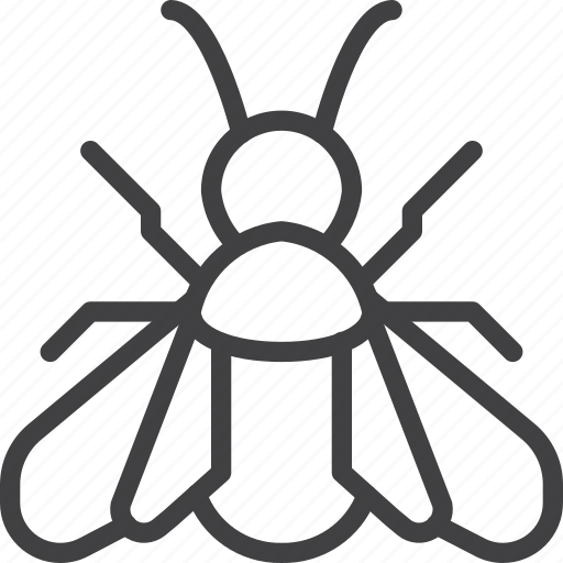 bee, fly, insect icon