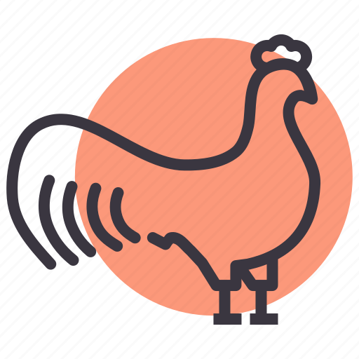 agriculture, bird, cock, farm, meat, poultry, rooster icon