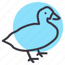 agriculture, bird, farm, fowl, goose, meat, poultry icon