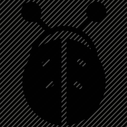 animal, bug, cartoon, insect, ladybird, ladybug icon