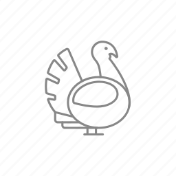 cock, feathers, fowl, gobbler, poultry, turkey icon