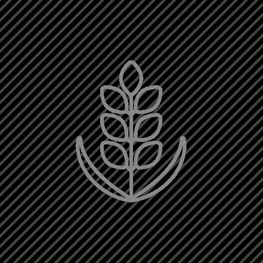 corn, grain, plant, rye, seed, stalk, wheat icon