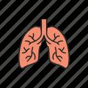 human, organ, lungs