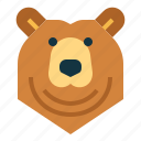 animal, bear, grizzly, head