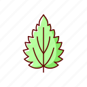 leaf, nettle, allergen, herb
