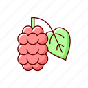 mulberry plant, blackberry, fruit, allergen