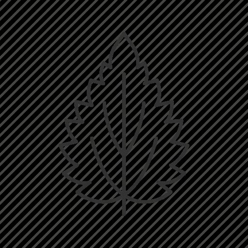 Leaf, nettle, allergen, herb icon - Download on Iconfinder