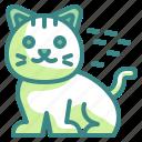pet, cat, zoology, animal, mammal