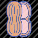 foods, nuts, peanuts icon