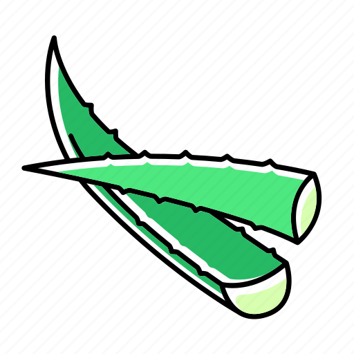 Aloe, cactus, cut, leaf, plant, succulent, vera icon - Download on Iconfinder