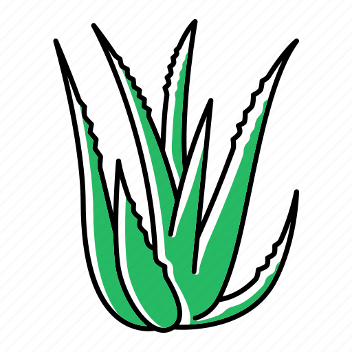 Aloe, botany, cactus, dermatology, plant, succulent, vera icon - Download on Iconfinder
