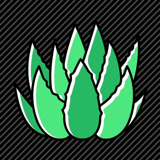 Aloe, botanical, cactus, foliage, plant, succulent, vera icon - Download on Iconfinder