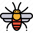 apis, bee, honey, honeybee, insect icon
